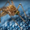 One woman dies with smoke set for mosquitos