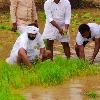 CBI Former JD Lakshminarayana joins paddy plantation in his leased