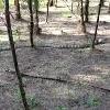 King Cobra spotted at East Godavari district