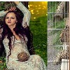 Photoshoot in a cage Cheetah attack on a model