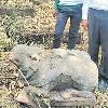 Mooshika statue found in Telangana