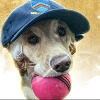 ICC Announces Dog Of The Month Award