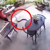 snake lunges at man while he was at a table