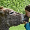 Is donkey milk good for your skin?