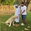Yuvi Tug Of War With Liger At Dubai Fame Park