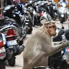 monkey takes away 1 lakh rupees and throws on the road