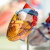 Taking flu shot may cut heart disease risk: Study