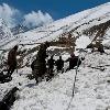 12 Trekkers Dead In Uttarakhand