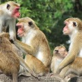 Monkeys ran away with cash and gold in Tamil Nadu