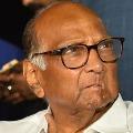 Sharad Pawar Advice to Sachin