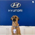 Hyundai showroom in Brazil appointed a streed dog as sales person