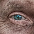 Harvard medical school research on rats eye sight