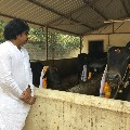 Pawan Kalyan Kanuma celebrations at his farm house