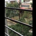 GHMC fined a man who cut a tree without permission