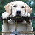 Madhya Pradesh police decides a dog genuine owner by dna test