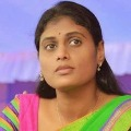 YS Sharmila calls unemployed do not loss confidence