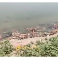 More dead bodies found at banks of Ganga river