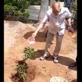 Superstar Krishna planted a sapling on his birthday