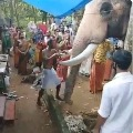 Elephant bids final farewell for his mahout in Kerala