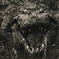 Crocodile named Osama killed so many people in Uganda