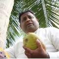 Sri Lankan minister climbed a coconut tree