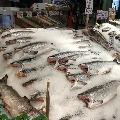 Life time of corona virus on Salmon fishes