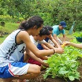 Every student in Phillippines must plant ten trees towards graduation as per new law