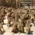 Minister Indrakaran Reddy inaugurates Monkey rehabilitation facility in Nirmal