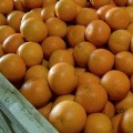 4 Men Eat 30 KGs of Oranges to Avoid Airport Luggage Charges