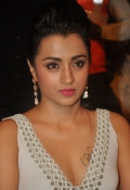 Producers council Angry over Trisha