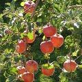 CM KCR calls apple farmer