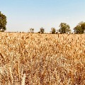 Centre hopes on Agriculture sector despite lock down