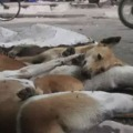 Dogs dying in Peddapally panic among locals