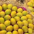 Mangoes Door Delivery By Government