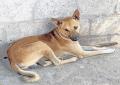 Street Dog Found Temple Hundi